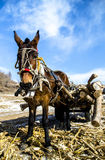 Wooden horse pulling a cart. The snow early wood horse pulling a cart Stock Photos