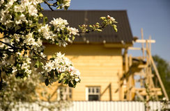 Wooden house. And bloom apple tree royalty free stock photo