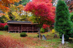 wooden house with autumn foliage color Royalty Free Stock Photography