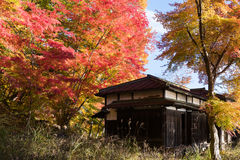 Wooden house autumn maple trees leaves. Wooden house with autumn red yellow maple trees leaves stock photography
