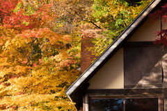 Wooden house autumn red maple trees leaves. Wooden house with autumn red yellow maple trees leaves stock images