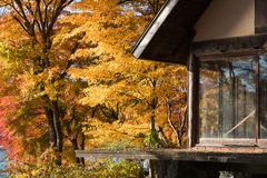 Wooden house autumn yellow maple leaves. Wooden house with autumn red yellow maple trees leaves stock images