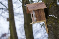 A wooden house for birds on the tree in the forest. Place to feed and to find food in winter time for birds. Bird feeder in park. Stock Image