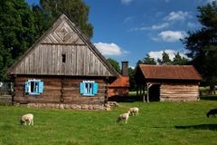 Wooden house with blue windows and sheep stock image