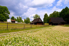 Wooden house and buckwheat field Royalty Free Stock Image