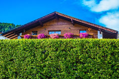 Wooden house - a chalet. Charming wooden house - a chalet behind a green hedge royalty free stock photo