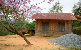 Wooden house with cherry tree in Dalat highlands, Vietnam Royalty Free Stock Photo