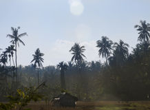 Wooden house in field. The picture was taken on the Bali island Stock Photo