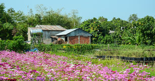 Wooden house with flower field in Vi Long, Vietnam Stock Image