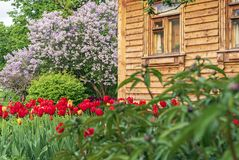 Wooden house with a flowering spring garden in the countryside royalty free stock photography