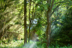 Wooden house in the forest in beams of the morning sun Royalty Free Stock Photography