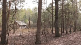 Wooden House in the Forest, wide shot stock video footage