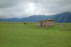 Wooden house in the grassland Stock Image