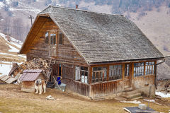Wooden house guarded by shaggy dog. Countryside landscape with traditional wooden house guarded by carpathian shepherd dog stock image
