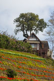 Wooden house on a hill in nature Stock Images