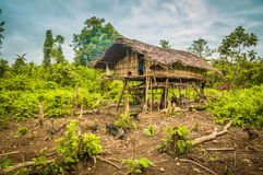 Wooden house with pigs Royalty Free Stock Images