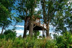 Wooden House on Tree royalty free stock images