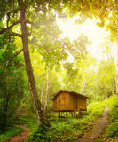 Wooden house in a tropical forest. Day and sunshine Stock Image