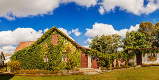Wooden house, which is covered with vines Royalty Free Stock Photography