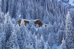 Wooden house in winter mountain forest. Large wooden house in the winter coniferous forest it is high in the mountains Royalty Free Stock Photos