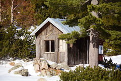 Wooden house in a  winter pine  forest Royalty Free Stock Images