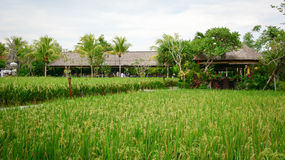 Wooden houses with the rice field in Bali, Indonesia Stock Image