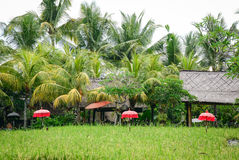 Wooden houses with rice fields in Bali, Indonesia Stock Photos