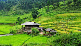 Wooden houses with terraced rice field in Phu Tho, northern Vietnam Stock Photo