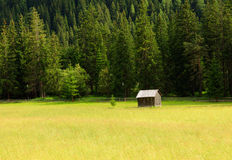 Wooden hut. In alpine meadow against conifer forest Royalty Free Stock Photos