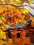 Wooden hut in autumn forest Royalty Free Stock Images