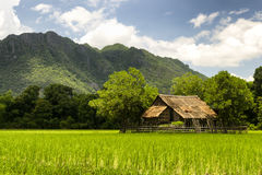 Wooden hut in the middle of rice field Stock Photo