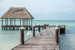 Wooden and Hut Palapa Pier with segals and birds Holbox, Tropica Stock Photo