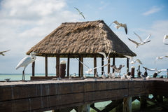 Wooden and Hut Palapa Pier with segals and birds Holbox, Tropica Stock Photography