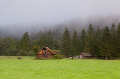 Wooden hut on pasture Royalty Free Stock Photos
