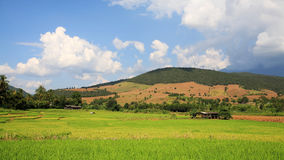 Wooden hut and rice field at the valley Royalty Free Stock Photo