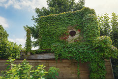 Wooden hut on the roof of a barn overgrown with ivy Stock Photo