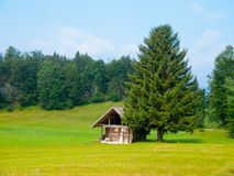 Wooden hut and tree in the middle of meadow Stock Photography