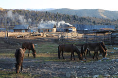 Wooden huts with horses Stock Images