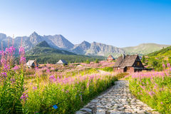 Wooden huts scattered on flowery meadow Royalty Free Stock Photos