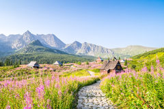 Wooden huts scattered on flowery meadow Stock Image