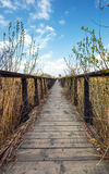 Wooden jetty Royalty Free Stock Photos