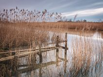 Wooden jetty by lake royalty free stock photo