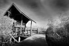Wooden jetty and Mangrove forest Royalty Free Stock Images