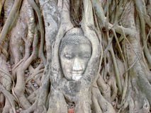 Head of Sandstone Buddha in The Tree Roots at Wat Mahathat Stock Photos
