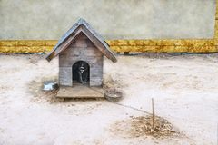 Wooden kennel with a dog. Wooden kennel with a black dog bound to the chain stock photos