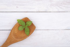 Wooden kitchen spoon with a young leaf of basil. Stock Images