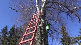 Wooden ladder on birch tree in spring stock video