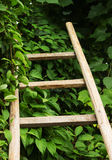 The wooden ladder lies on green leaves Stock Images