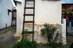 Wooden ladder and rose plant. In a back yard of a house Royalty Free Stock Photo