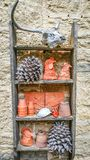 Ladder Shelf Full of Nature Items. A wooden ladder shelf hanging on a stone wall, filled with items from nature. A skull, pine cones, chicken heads turtle shells stock photography